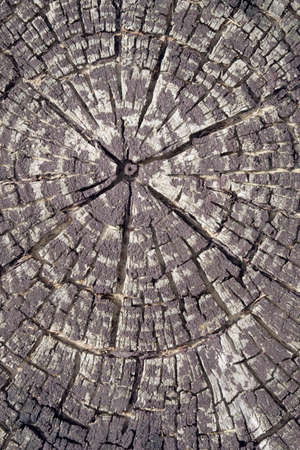 texture of the wood