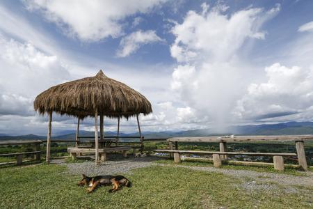 Uitkijkplatform met rieten kiosk, over de blauwe hemel en witte wolken. Een gele hond ligt op de grassen.