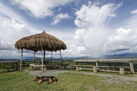 Viewing Platform with thatched kiosk, over blue sky and white clouds. A yellow dog is lying on the grasses.