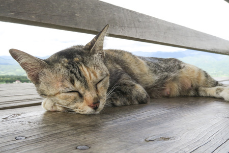 Close up to a sleeping cat