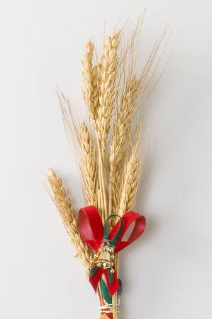 ears of barley on white background photo
