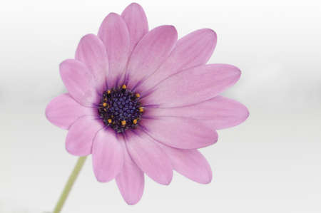flower on white background Stock Photo - 10616201