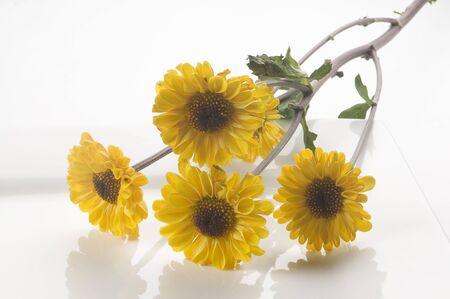 dynamic growth: flowers