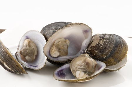 clams fish snacks Stock Photo