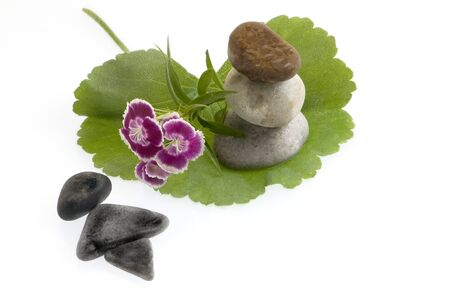 spa still life with flowers and stones Stock Photo - 10763636