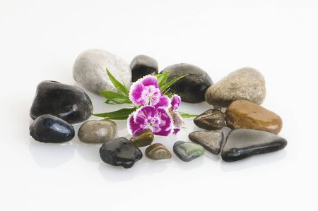 spa still life with flowers and stones photo