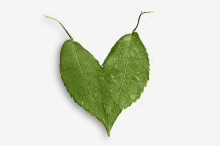 hojas: coraz�n de hojas verdes