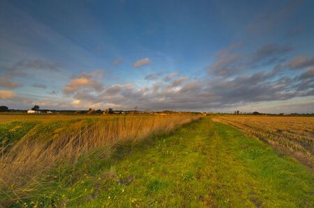 Windy day captured in a rural landscape