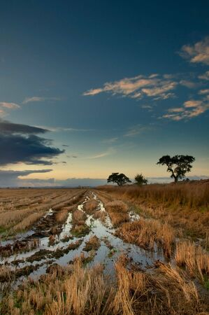 Ricefield after the harvest, Ribatejo Portugal Stock Photo
