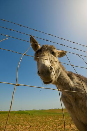 Young donkey caught by a wide angle lens