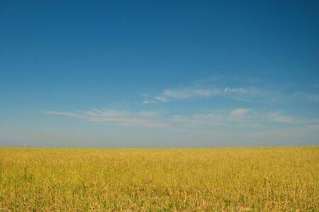 Golden field Stock Photo - 4684844