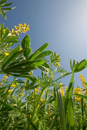 Beautiful yellow spring flowers