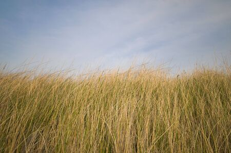 Background of a summer field with light blue sky Stock Photo - 4684882