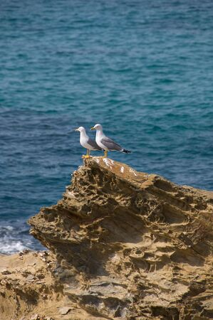 Couple of seagulls standing on a cliff, watching the ocean
