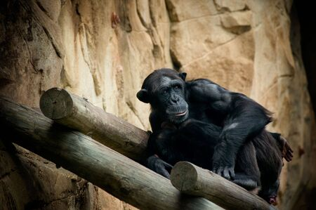 Scared and lonely black monkey