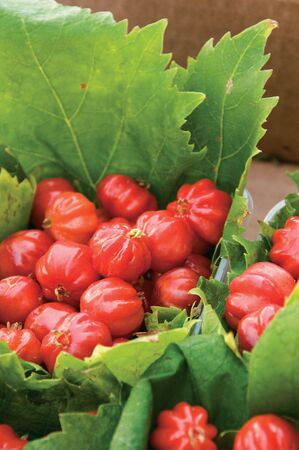 Close-up of Brazilian Cherry, also known as pitanga