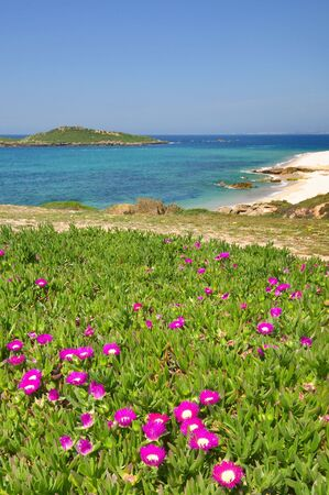 View of Pessegueiro Island, in Porto Covo, Portugal, during spring