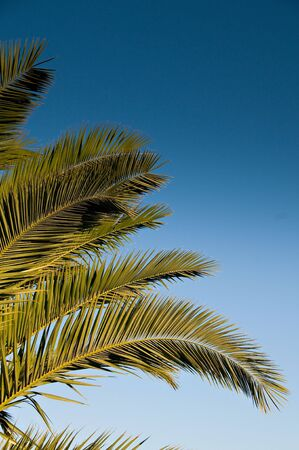 Palm tree leaf isolated over blue sky Stock Photo