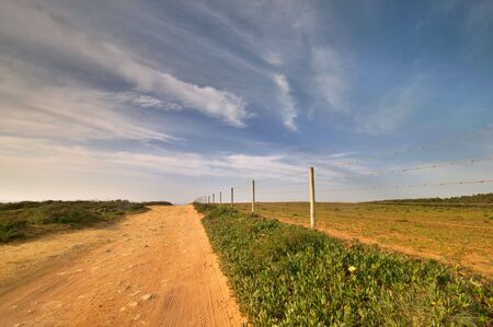 Rural road near the beach, with typical coastline flowers growing on the ground Stock Photo - 4692812