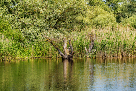danubian: Riverbank of the Danube river with reeds and trees Danube Delta Romania Stock Photo