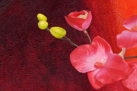 pinc orchid isolated on a colored background photo