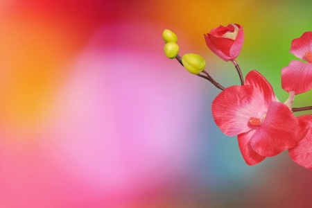 pink orchid isolated on a colored background photo