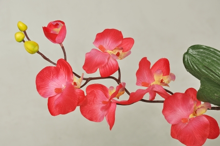 pinc orchid isolated on a grey background photo
