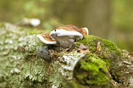 mushroom on a tree photo