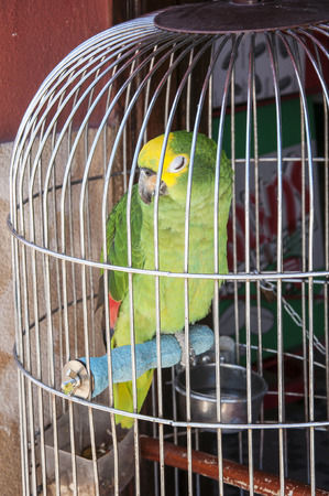 mccaw: Colorful parrot in a cage at home