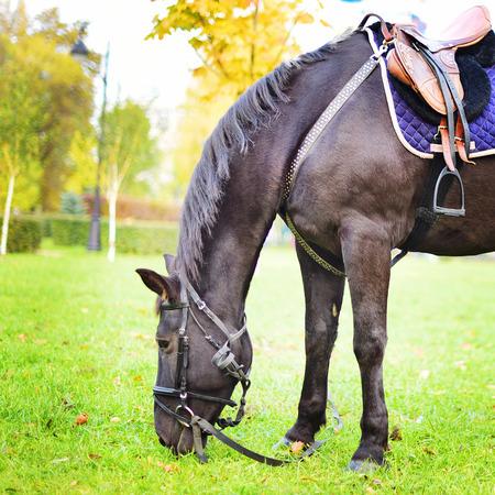pista: brown horse in autumn