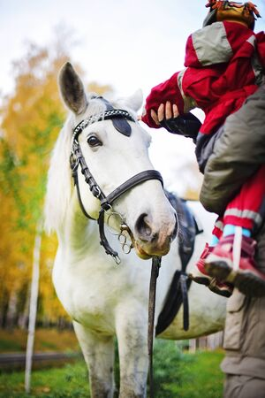 pista: small child is petting a White horse. Autumn