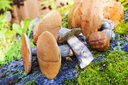 cut edible mushrooms