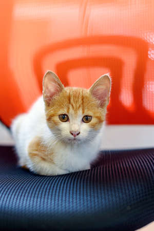Cute little red kitten sitting on an office chair. Out of focus
