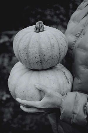 Women's hands hold two pumpkins from their garden plot. Black and white tinting.
