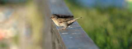 One sparrow sitting on a handrail pending flight photo