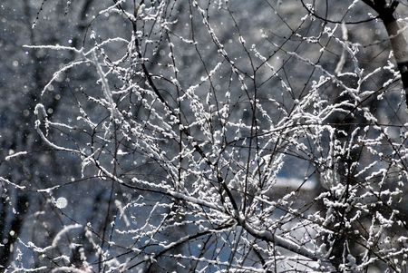 Branches of a tree covered by hoarfrost on a background of a going snow photo