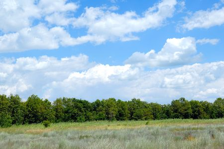 lea: Trees in the field against the blue sky with clouds Stock Photo