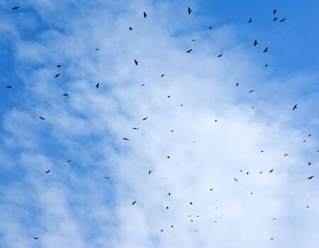 Birds flying in the sky with a clouds in the background. Stock Photo