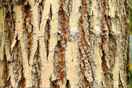 Tree bark. Details. Close up. Texture. photo