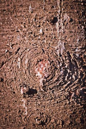 Close up of resin tree bark.