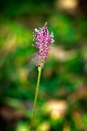 Beautiful Wild Flower, blurry background.