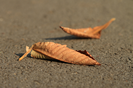 Autumn colored dry leaves isolated on blurry background. Orange and yellow, colorful foliage in the fall season.