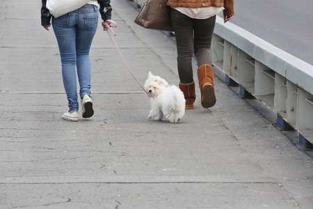 pappy: Two Girls Walking Maltese Pappy