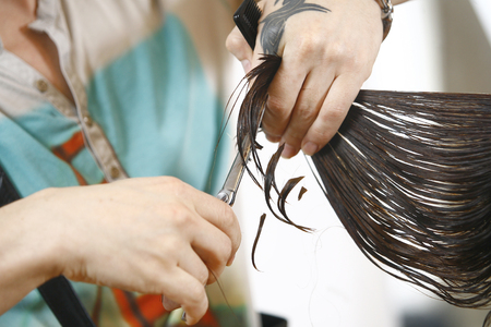 hair stylist: Hair Cutting, Hair Stylist at Work with Scissors