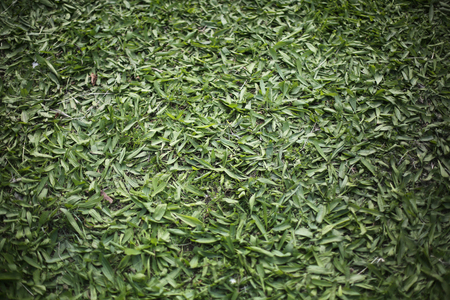 trampled: Trampled Green Grass Texture For Background Stock Photo