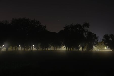arboles frondosos: Calm starry night landscape with leafy trees in row with golden street light beams shining through and empty field of grass in front