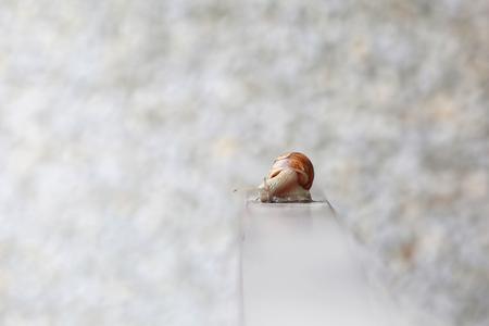 도시의 테라스 울타리에 달팽이 있습니다.