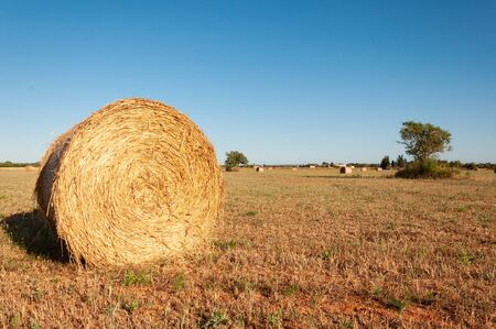 Rural field with large straw balls at sunset. Location of Campos, Island of Mallorca, Spain