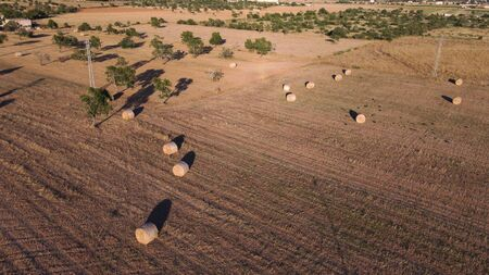 Aerial view of a rural field with large straw balls at sunset. Location of Campos, Island of Mallorca, Spain Imagens