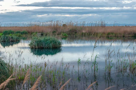 Sunset at the Albufera de Valencia in autumn. Wild vegetation and reflections. Protected natural area Stok Fotoğraf - 159056589